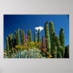 Pique muchas plantas, desierto de Sonoran, flores  Poster