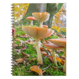 Piso del bosque con agáricos y hojas de mosca en cuaderno