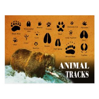 Pistas animales tarjetas postales