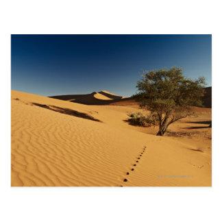 pistas en el paisaje del desierto de Namib en Postal