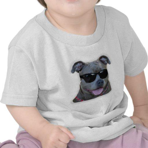 Pitbull azul con los vidrios camisetas