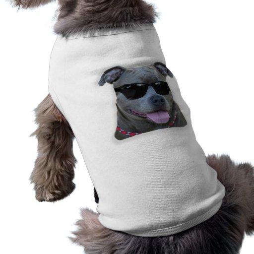 Pitbull azul con los vidrios ropa perro
