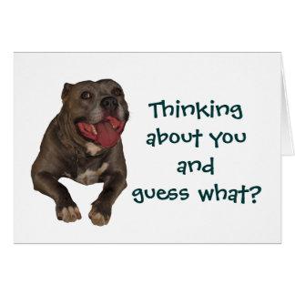 Pitbull que piensa en usted la tarjeta de