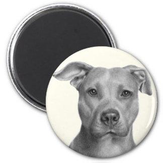 Pitbull Terrier americano Imán Para Frigorífico