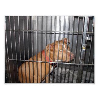 Pitbull triste del moreno en jaula en la libra de  arte fotografico