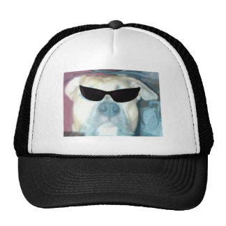 Pitbulls es fresco gorras de camionero