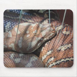 Pitón de la alfombra de Centralian