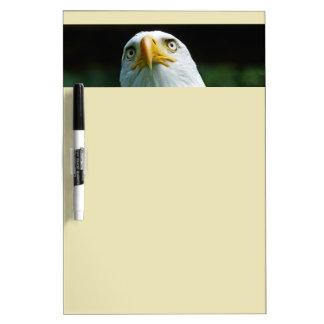 Pizarra Blanca Cabeza americana de Eagle calvo