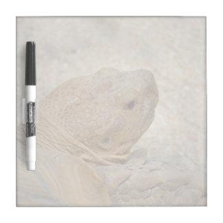 Pizarra Blanca cierre de la cabeza de la tortuga encima de la