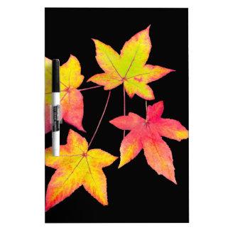 Pizarra Blanca Cuatro hojas de otoño coloreadas en fondo negro