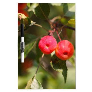 Pizarra Blanca Frutas de un manzano salvaje