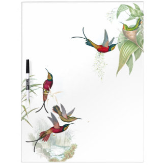 Pizarra Blanca La fauna de los pájaros del colibrí floral seca al
