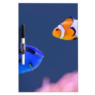 Pizarra Blanca Natación de los pescados del surgeonfish y del