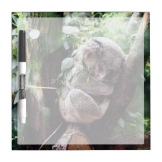 Pizarra Blanca Oso de koala lindo que se relaja en un árbol