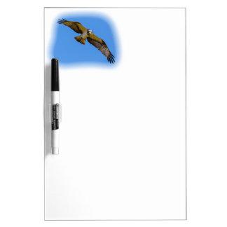 Pizarra Blanca Osprey del vuelo con una blanco en vista
