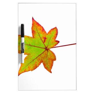 Pizarra Blanca Una hoja de arce colorida en otoño en blanco