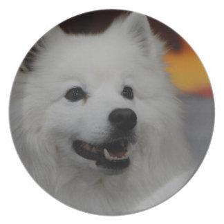 Placa americana del perro esquimal platos