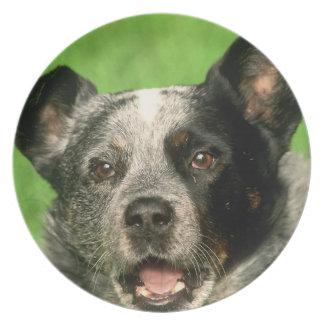 Placa australiana del perro del ganado platos de comidas