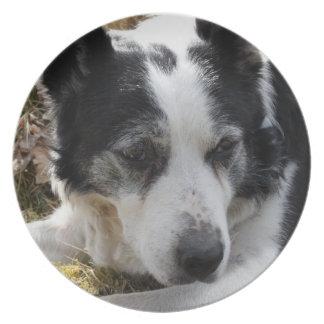Placa australiana negra del perro del ganado plato para fiesta