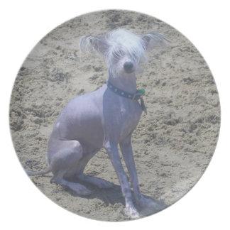Placa con cresta china del perro platos para fiestas