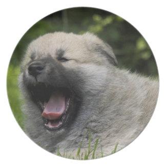 Placa de bostezo del perro chino de perro chino plato