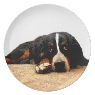 Placa de la Ratón-Ojo-Vista del perro de montaña d Platos De Comidas