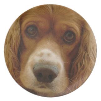 Placa de la raza del perro de aguas plato