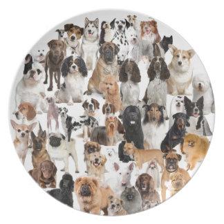 Placa de la raza del perro platos para fiestas
