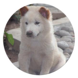 Placa de los perritos del perro chino plato para fiesta