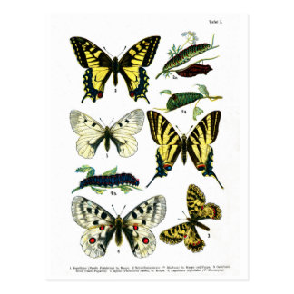 Placa de mariposas europea I Postal