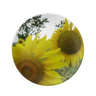 Placa decorativa de la porcelana de la foto de los plato de porcelana
