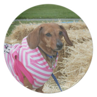 Placa decorativa del perro del Dachshund Plato Para Fiesta