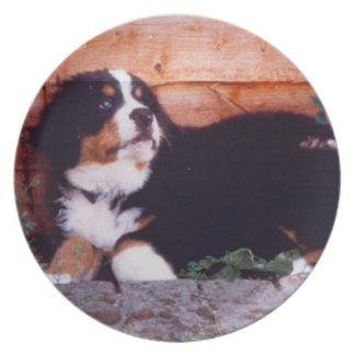placa del perrito del perro de montaña bernese platos para fiestas