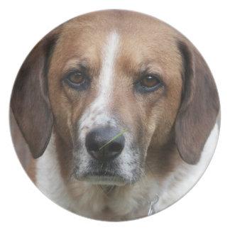 Placa del perro