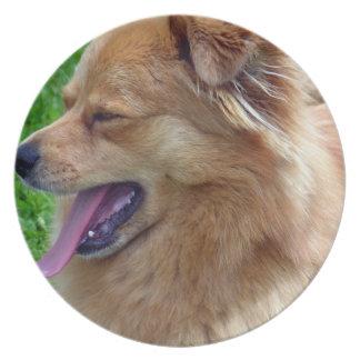 Placa del perro chino de perro chino plato para fiesta
