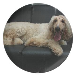 Placa del perro de afgano plato para fiesta