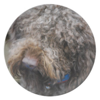 Placa del perro de aguas platos para fiestas