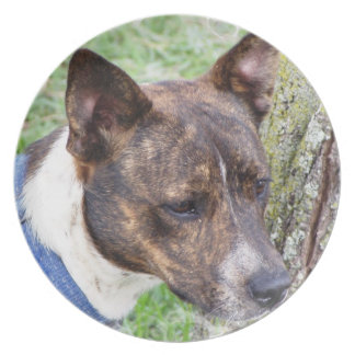 Placa del perro de Basenji Plato Para Fiesta