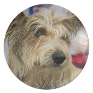 Placa del perro de Berger Picard Platos Para Fiestas