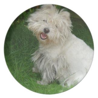 Placa del perro de Bichon Frise Platos De Comidas