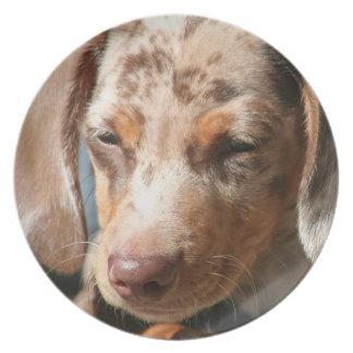 Placa del perro de Daschund Platos