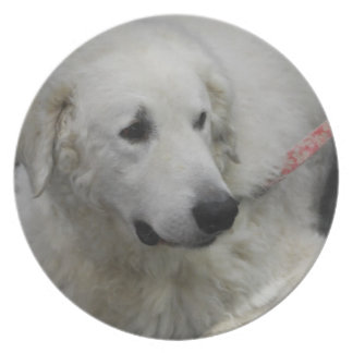 Placa del perro de Kuvasz Platos