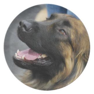 Placa del perro de Leonberger Plato