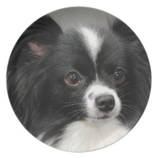 Placa del perro de Papillon Platos