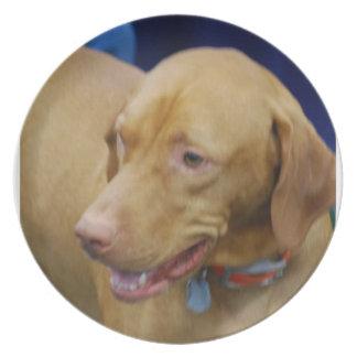 Placa del perro de Vizsla Platos