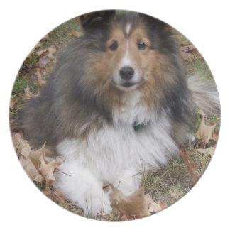 Placa del perro del collie platos
