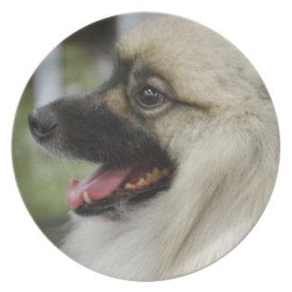 Placa del perro del Keeshond Plato