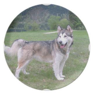 Placa del perro del Malamute de Alaska Plato De Comida