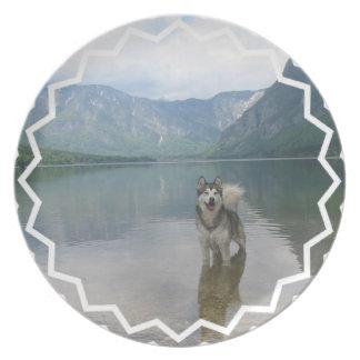 Placa del perro del Malamute Platos De Comidas