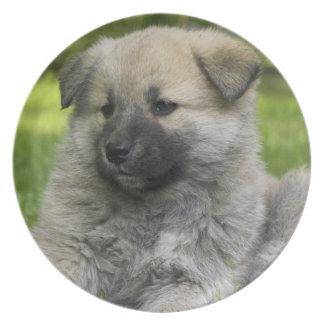 Placa del perro del perro chino de perro chino platos de comidas